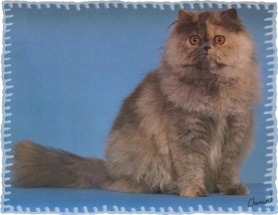 cat toilet seat trainer
