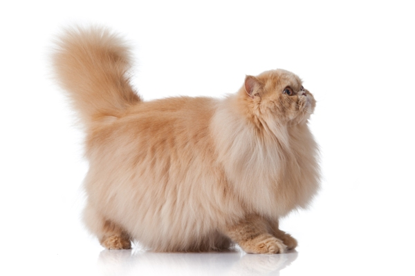 Questions To Ask To Find Cat Breed