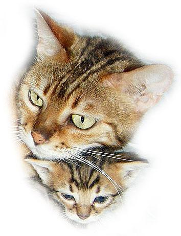 common cat names