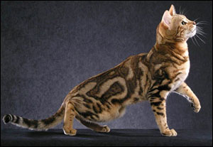 What Are the Characteristics of Tabby Cats? | eHow