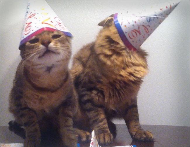 Cats Celebrating Birthdays