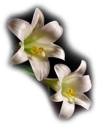 fact that Easter lilies pose a potential health hazard to their pets