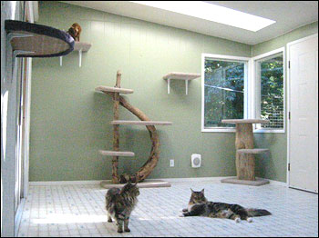 ... Scratching Posts And A Number Of Carpeted Shelves By The Windows And Up  The Walls. The Driftwood Scratching Posts Are From Phoenix Feline Furniture.