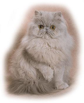 lavender cat - photo #18
