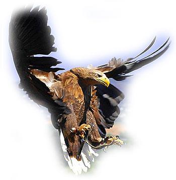 To Kill A Mockingbird Thesis Statement