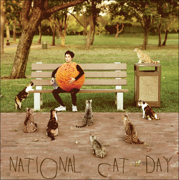 nationalcatday national cat day 2013
