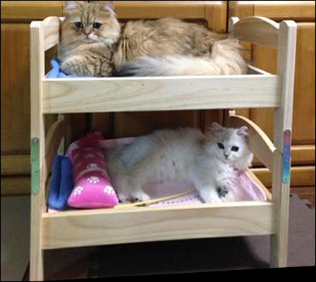 The Ikea Quot Cat Quot Bed