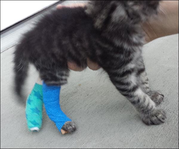 Cat Back Legs Collapsing