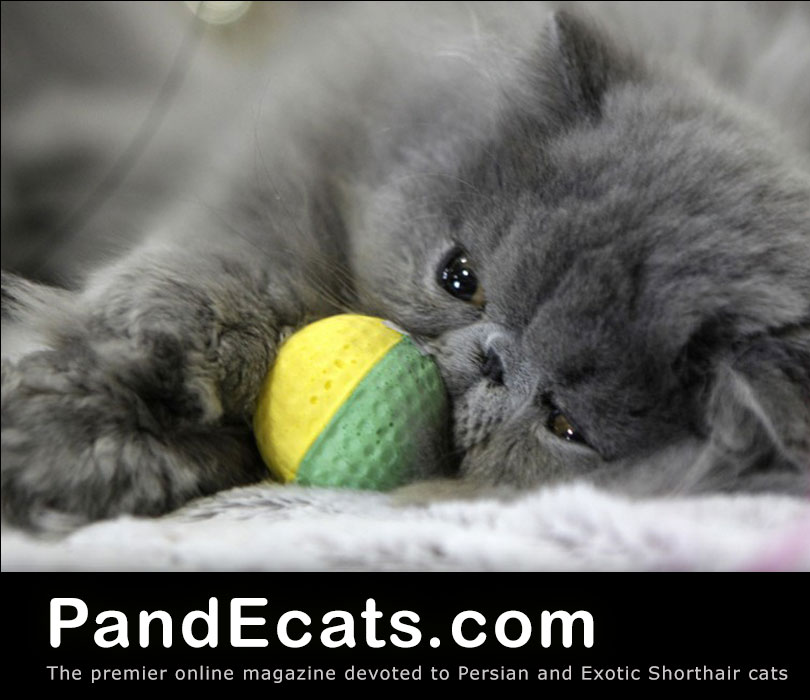 Pandecats The Premier Online Magazine Devoted To Persian And